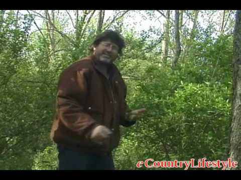 How to find Morel Mushrooms