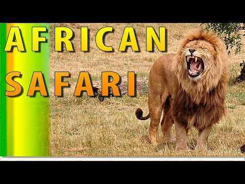 South African Safari Wildlife Park: Get a Great Impression Of Unity With Wildlife On African Safari