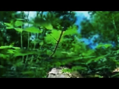 Fantastic nature photography of plant growth of brambles - The Private Life of Plants - David Attenborough - BBC wildlife