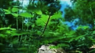 Fantastic nature photography of plant growth of brambles - The Private Life of Plants - David Attenborough - BBC wildlife thumbnail