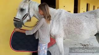 Tuto: seller et brider un cheval (facile)