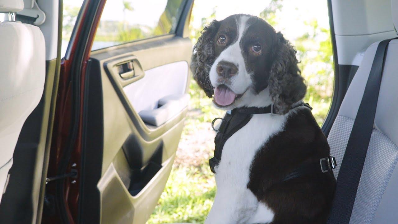 kurgo dog harnesses youtube. Black Bedroom Furniture Sets. Home Design Ideas