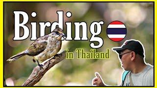 Gambar cover Birding in Thailand | Banlaem Station | Bird Watching (Sabahan Youtuber Vlog)