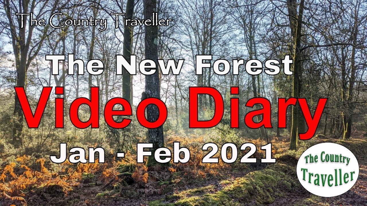 The New Forest Video Diary - Jan Feb 2021 Update