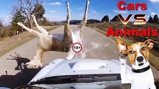 CARROS VS ANIMAIS - ACIDENTES INCRIVEIS - ♚BRAGA98♚