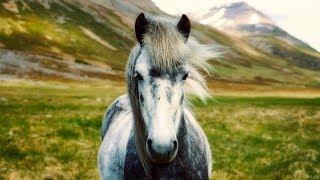 The Nature Icelandic Horses Music Video
