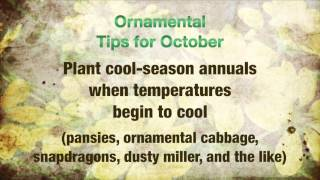 Horticulture Tips for October
