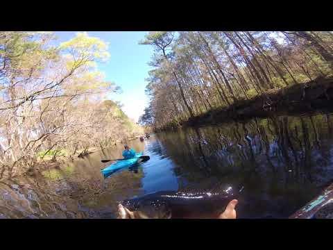 Big bass on the little satilla river