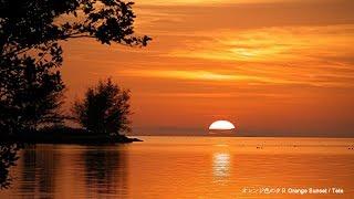 オレンジ色の夕日 Orange Sunset - Tete & サエルノダ