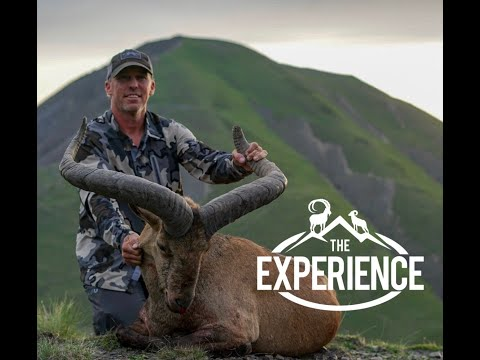 The Azerbaijan Experience - Hunting Dagestan Tur With Shikar Safaris