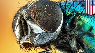 Do flies spread disease? New research says yes, and more than suspected - TomoNews