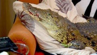 В иркутской квартире живет нильский крокодил (новости)