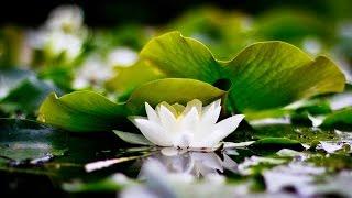 Восточная медицина во Вьетнаме, Нячанг - Центр традиционной медицины Белый Лотос | White Lotus(, 2016-09-13T08:14:51.000Z)
