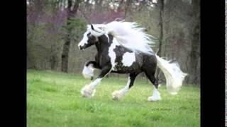 Akhal Teke Horse アハルテケは、毛並が美しいトルクメニスタン原産の馬...