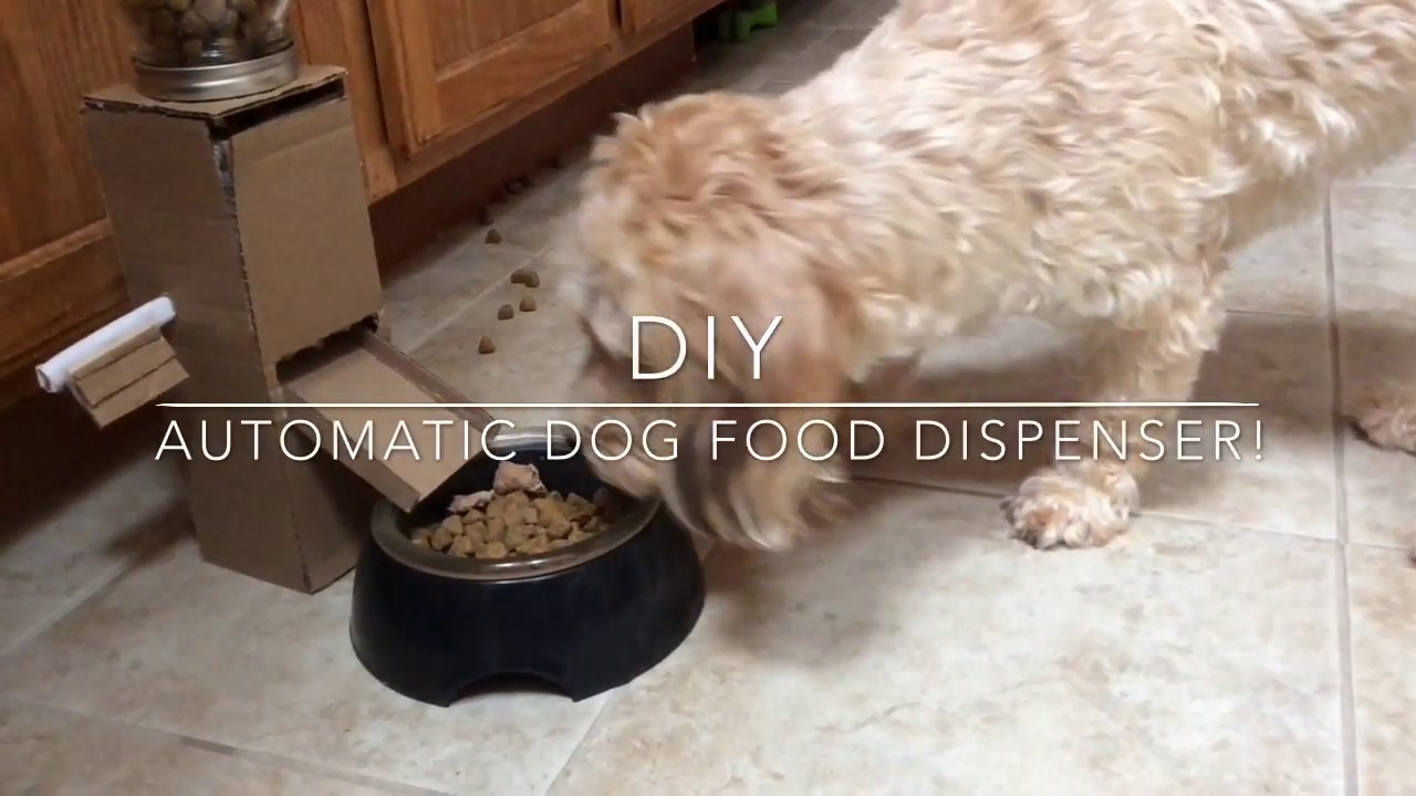 how to make automatic food dispenser for gerbils