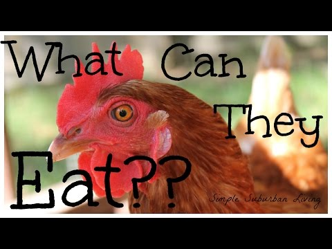 What Can You Feed Your Chickens?