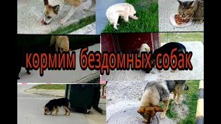НА НАС НАПАЛИ СОБАКИ!/ кормим  бездомных собак и 1 кот)