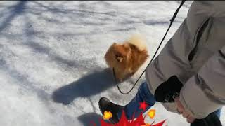 Постоянный лай собаки. Дневник кинолога Алексей Саламатин