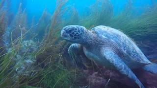 Sea Lions, Turtles & Sharks!!!