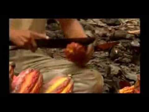 Juanjuí y la ruta turística local del cacao.