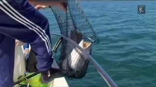 Pesca de Corvinas Gigantes,com Néstor Santos