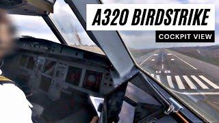 Airbus A320 - Birdstrike near 50ft - COCKPIT VIEW - Landing at Kiev - GoPro Pilot