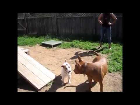 Dog Training - Biggie and King...