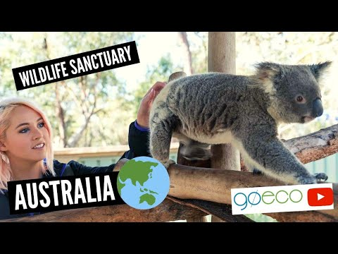 GoEco Australia Wild Animal Sanctuary