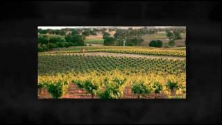 California Vineyard For Sale - Zinfandel - Amador County, CA