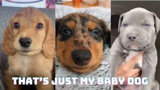 That's Just My Baby Dog (Official Tik Tok Music Video)