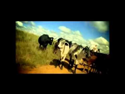 Cattle Immobiliser - CAT 44I