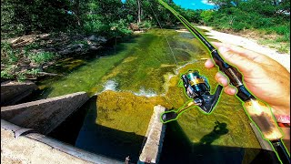 Catching RARE Fish in CRYSTAL CLEAR CREEK + (Googan Baits Rattlin' Ned)