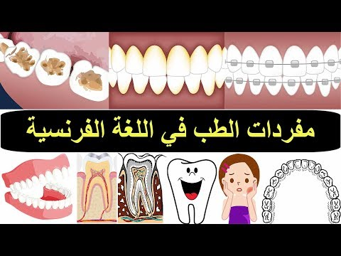 طبيب الاسنان بالفرنسية – مفردات الطب في اللغة الفرنسية –  تعلم اللغة الفرنسية