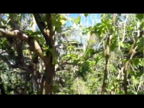 Fairy terns on Aride Island