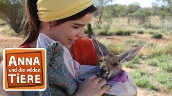 Boxen mit dem Känguru (Doku) | Reportage für Kinder | Anna und die wilden Tiere