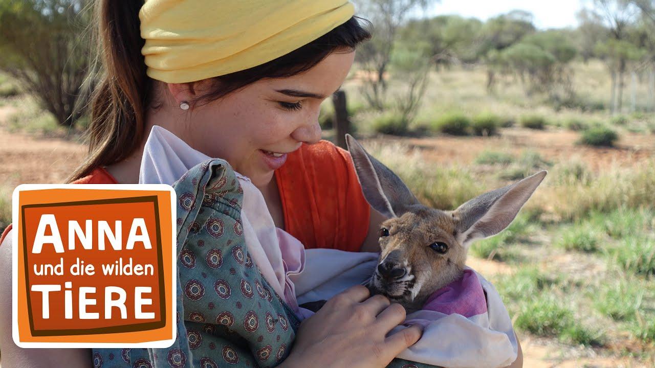 Boxen Mit Dem Kanguru Doku Reportage Fur Kinder Anna Und Die Wilden Tiere Youtube