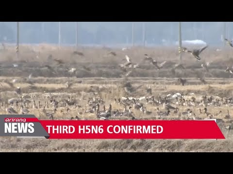 Tests indicate possible mixture of highly pathogenic bird flu strains: Quarantine Agency