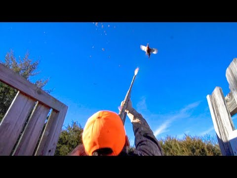 INSANE Nebraska Pheasant Hunting 2017