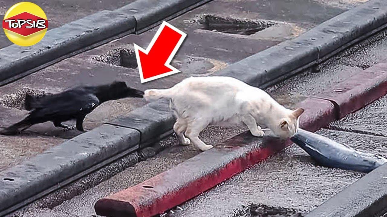 จะเกิดอะไรขึ้นเมื่อสัตว์ไปแกล้งสัตว์อีกตัวหนึ่ง (เพื่อ?)