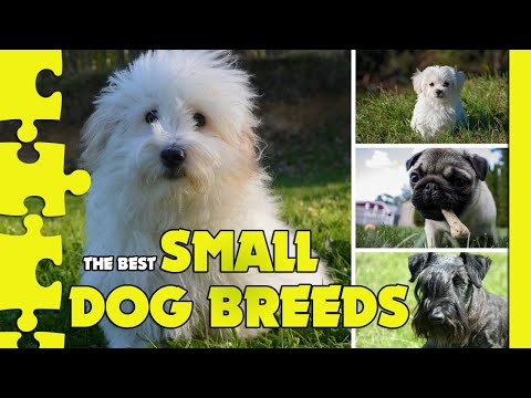 THE BEST SMALL DOG BREEDS - All About Dogs