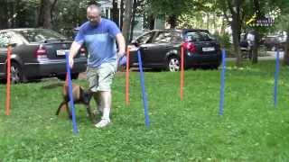 Дрессировка собак ОКД или социализация щенка, что важнее для послушания