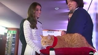 Kate Middleton Meets Movie-Star Cat