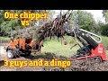 Echo Bearcat Woodchipper vs 3 guys and a Toro Dingo