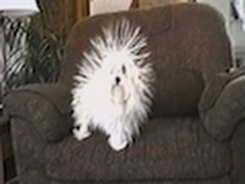 CuteWinFail: Static Dog