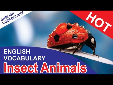 Vocabulary animals | Insect animals | Vocabulary words with meaning | English vocabulary