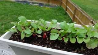 Container Gardening Spring 2013