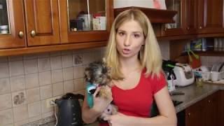 Как накормить щенка, если он не хочет кушать