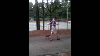 Lucy Lu (6mo Mini Schnauzer) Learning Heel - Raleigh Durham Dog Training