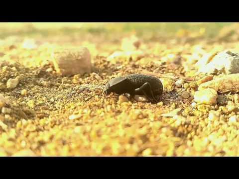 Nature  video clip by Veeresh annigeri.