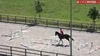 HorsePhysio.ch - Exercise Simple A1